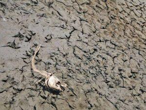 A 'mass extinction event' is under way